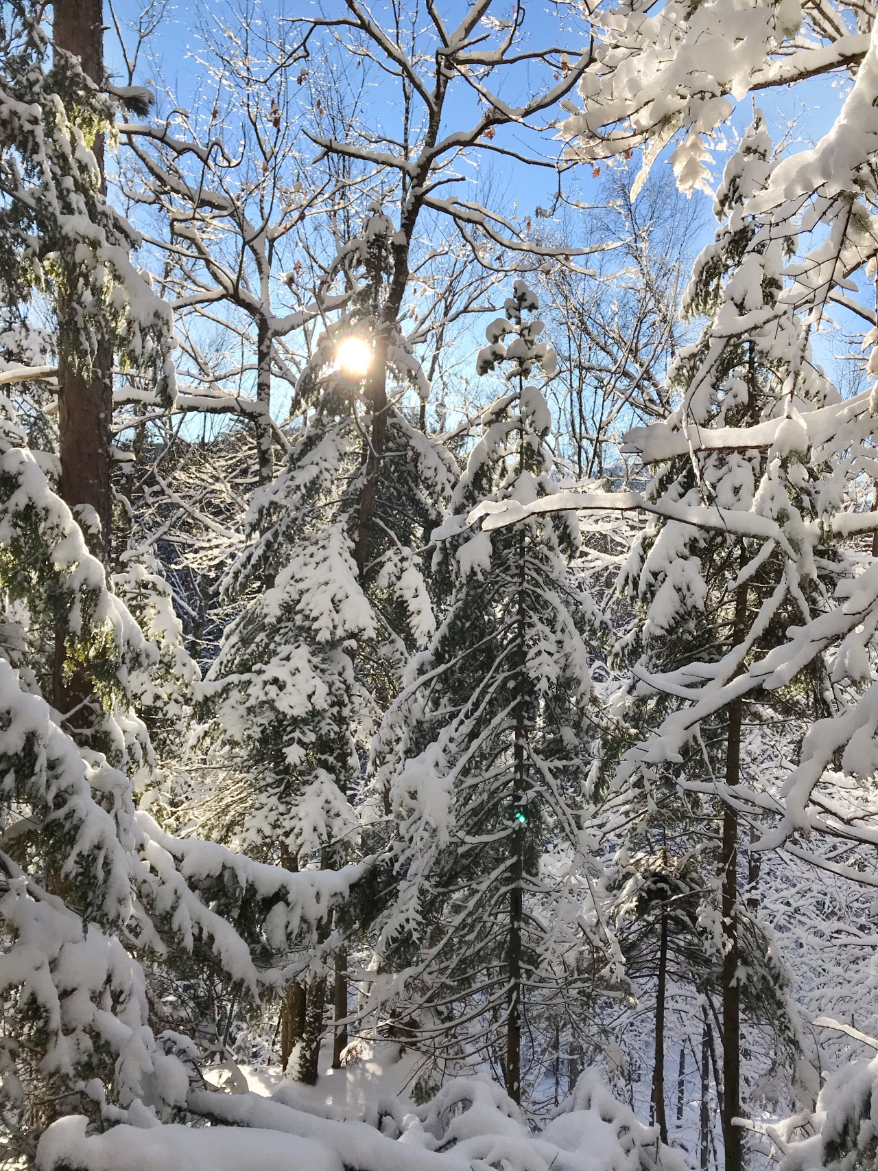 baxter mountain: sunlight through trees edit