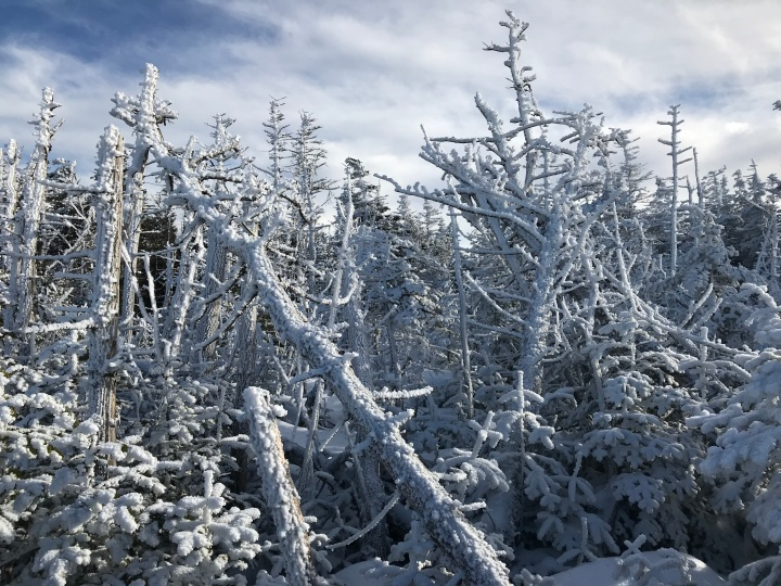 frozen trees, esther mountain hike