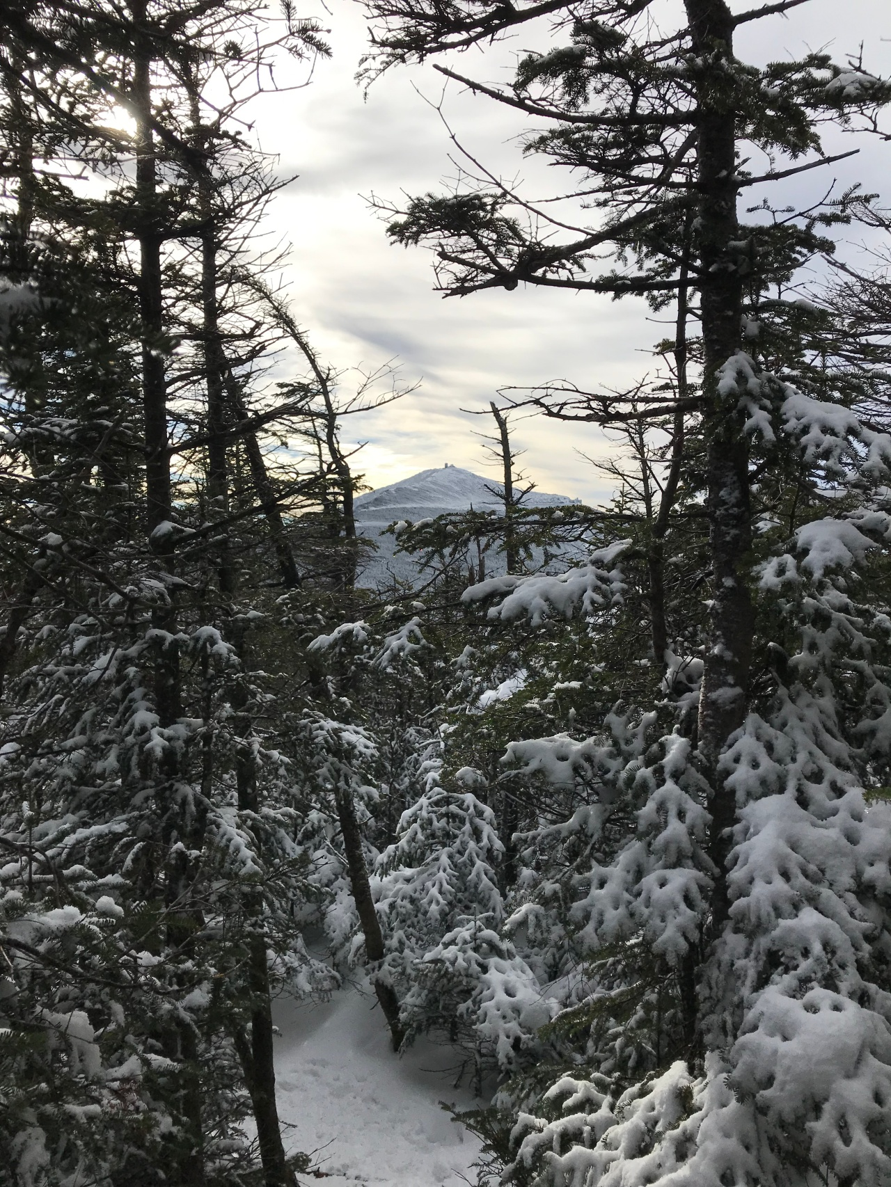 whiteface mountain through the trees