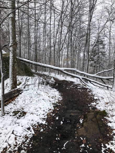 Baker Mountain Trail Tree Down