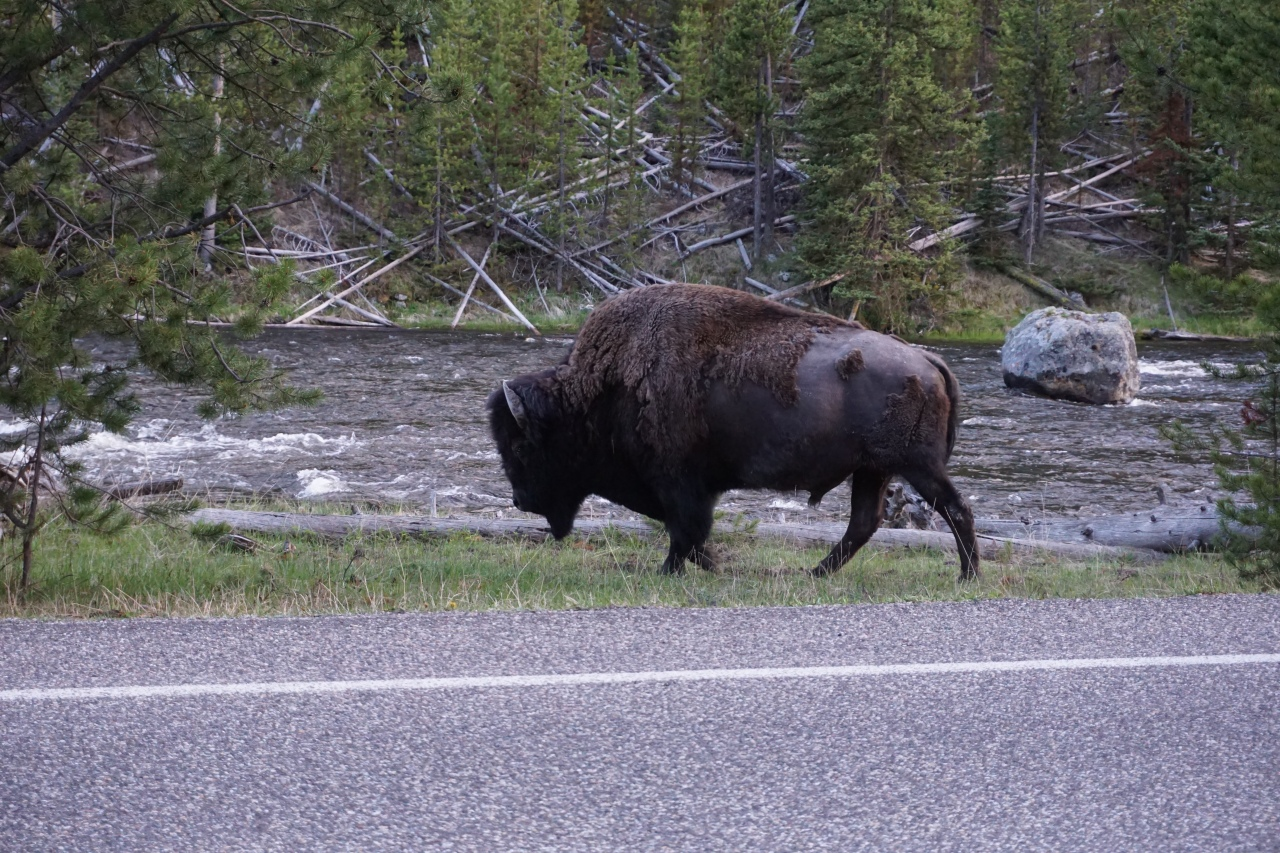 Road Trip to Yellowstone NP: Day Six5/30/19