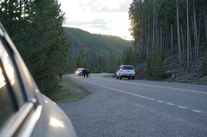 Bison Road Traffic