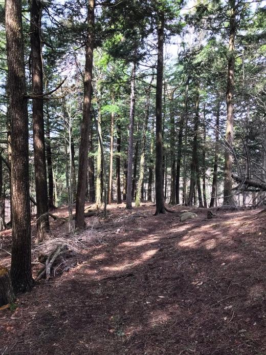St. Regis woods
