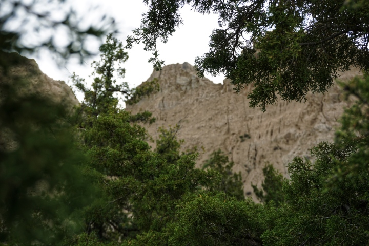Badlands through the trees