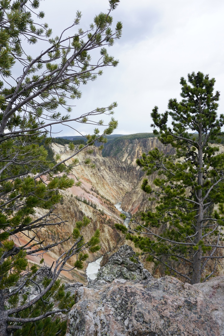 Grand Canyon of Yellowstone with trees