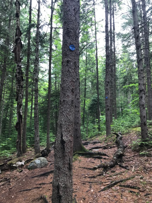 Haystack Saranac Blue Trail Marker