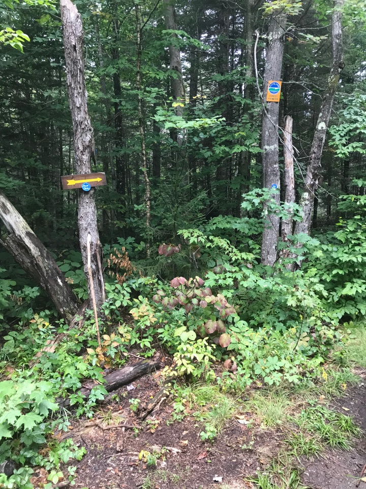 Panther Peak - Blue Signs to to get off gravel road