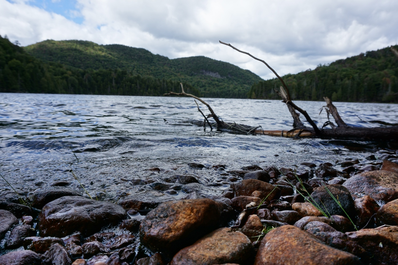 Upper Pond: A Ghost Town, a Scenic Pond, and Stepping on a Hornets'Nest