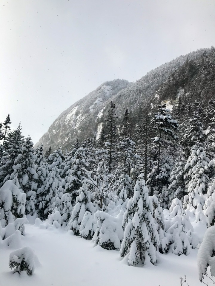 Snowy Trees Before Avalanche Lake